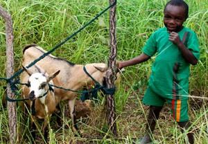 Zambia-dreng med geder-web