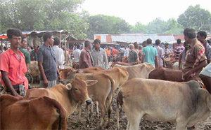 Ko-Bangladesh-web